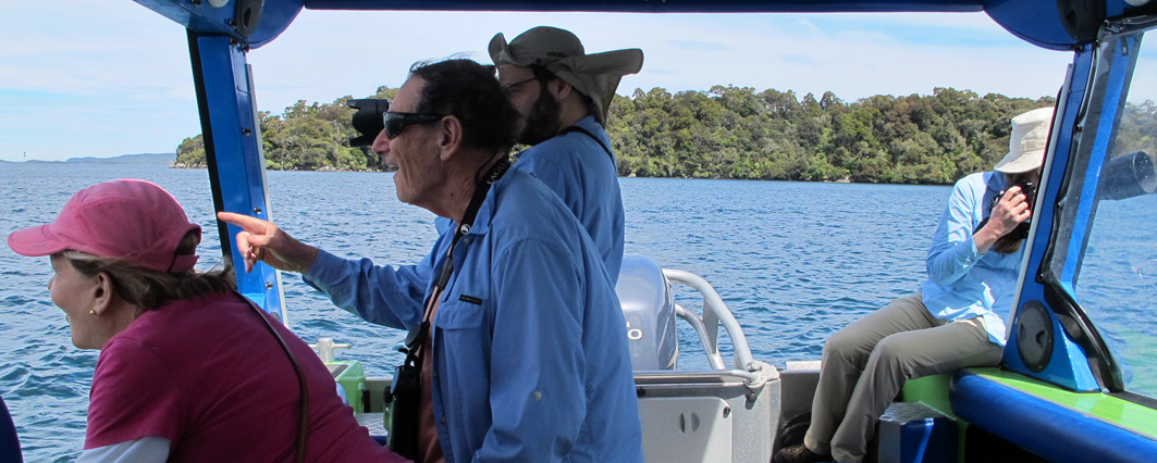 Aihe Eco Charters & Water Taxi Clients Watching Dolphins, Stewart Island